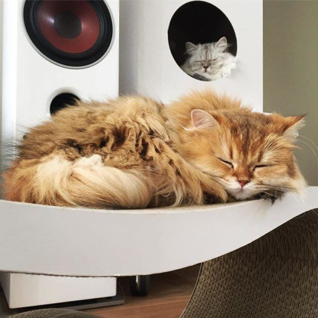 premiera kolekcji dla zwierząt w IKEA