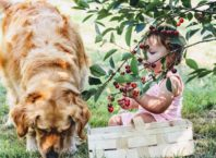 Produkty, który nie może jeść pies