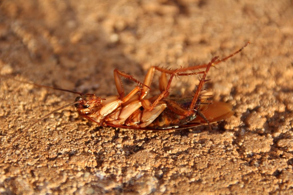 Środki na prusaki i karaluchy