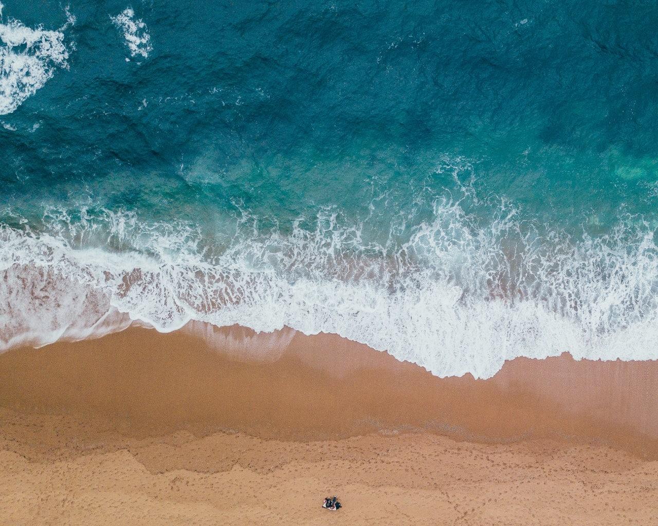 sinice w morzu