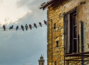 gołębie na balkonie