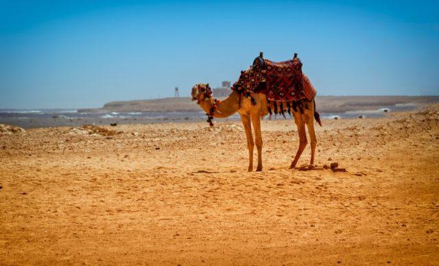wakacje w egipcie 2019